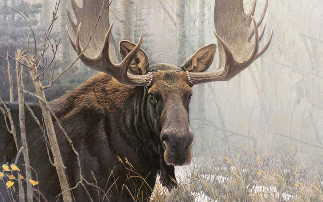 the bull moose analysis Alden nowlan (1933 - 1983), in 1962, wrote the canadian poem the bull moose at first read, the poem seems to be about a wild male moose that, while looking for a place to die, has wandered into a small town.